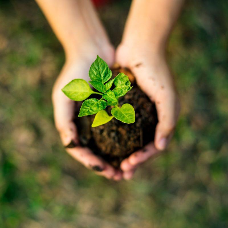 Mão segurando uma planta.